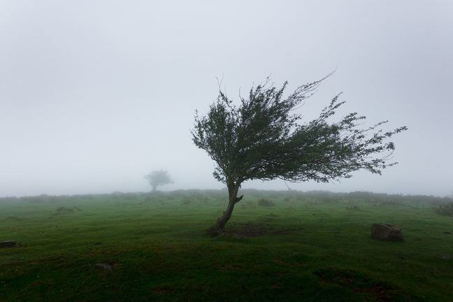 A photo of a tree standing against a strong wind