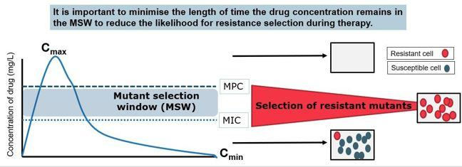 Graph showing how the length of time the drug stays in the mutant selection window will effect the liklihood for drug resistant selection.