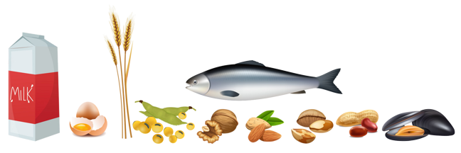 Figure 1. Examples of the eight most common food allergy sources (cows' milk, eggs, wheat, soy, tree nuts, peanuts, fish and shellfish