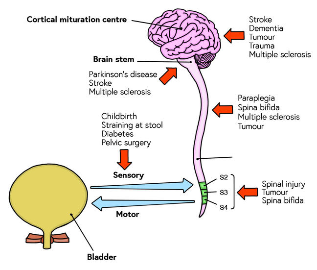 Neurological levels