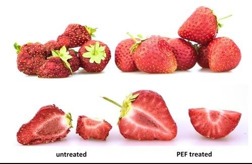 A comparison between a untreated and PEF treated strawberry. The untreated strawberry is very dry and shriveled