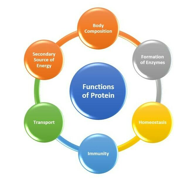 Figure 1: Functions of Proteins
