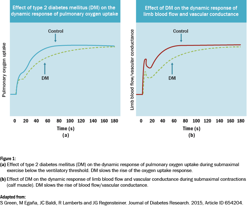 Two graphs showing relationship between diabetes and dynamic response of pulmonary intake and dynamic response of limb blood flow and cascular conductance