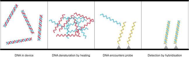 DNA detector