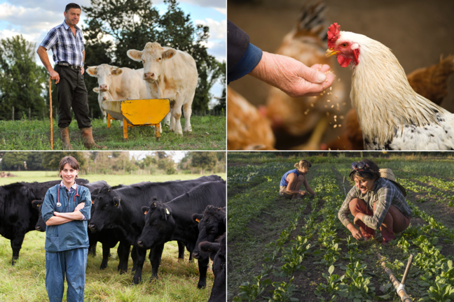 Farm experts