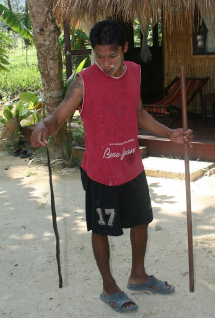 Young man working with snakes