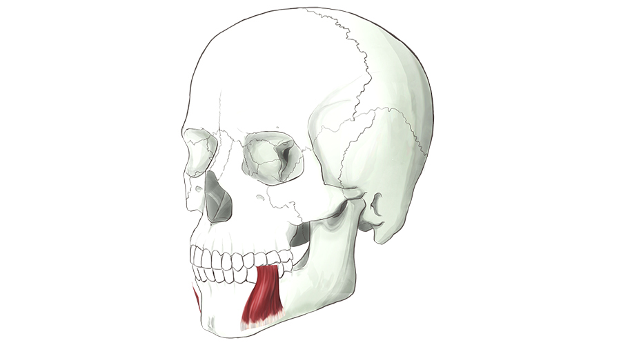 Depressor Anguli Oris. This muscle lowers the corners of our mouth into a frown.