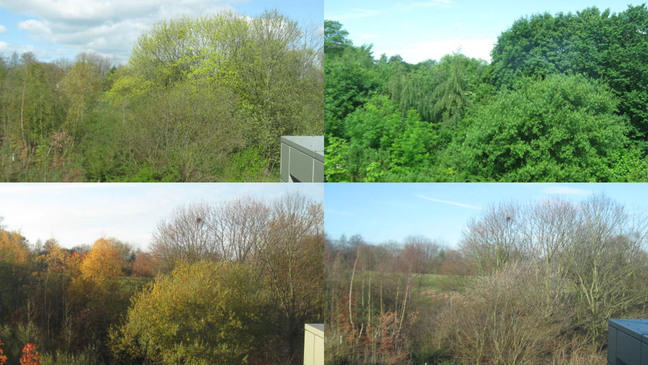 Four seasons. Trees in spring, summer, autumn and winter taken from the same position over the year