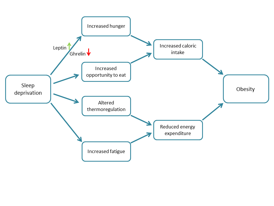 flowchart depicting the implications of sleep deprivation and its relationship with obesity