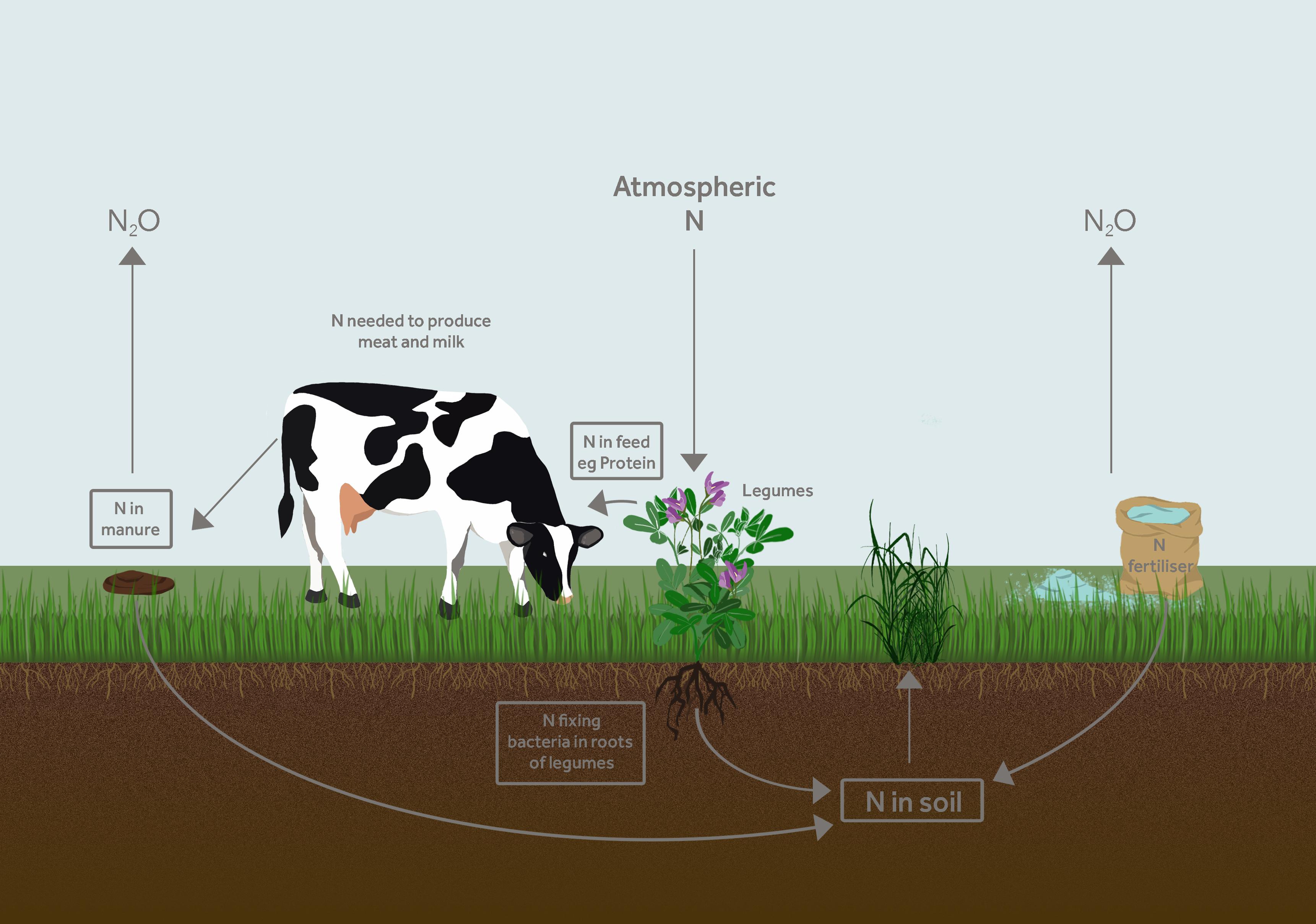 Nitrogen Efficiency In Feed