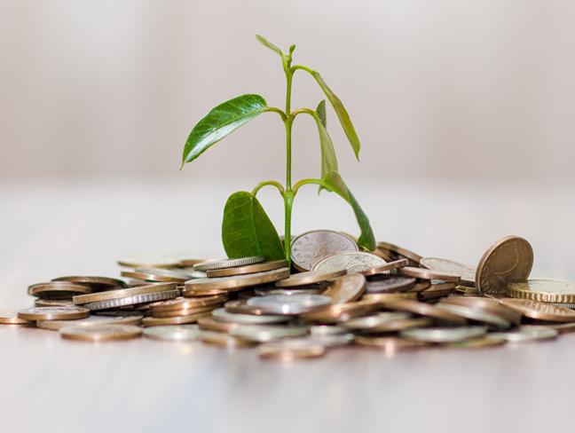 growing plant on money