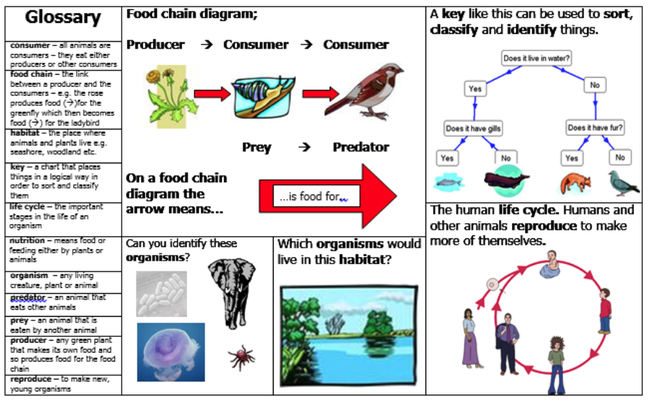 An example vocabulary map showing definitions in a glossary, diagrams such as food chains and classification trees and images with questions