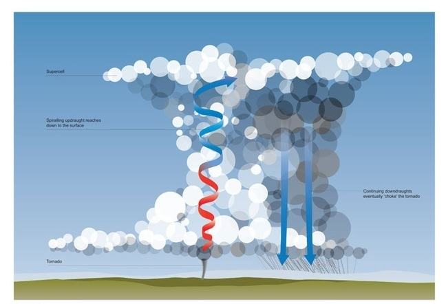 Graphic showing a large cumulonimbus that has become a supercell. A red arrow becoming blue which is an updraught, a tornado coming from the bottom of the updraught which is spiralling and reaching down to the ground, two blue arrows pointing downwards through the cloud, which are continuing downdraughts that eventually 'choke' the tornado.