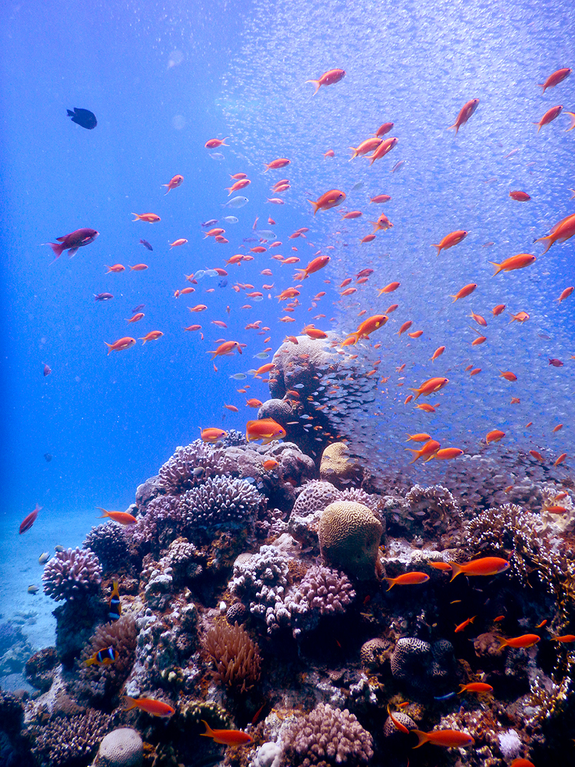A school of brightly coloured fish swimming above a coral reef with blue ocean background.