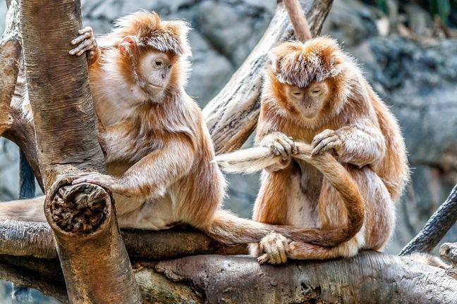 Animal altruism