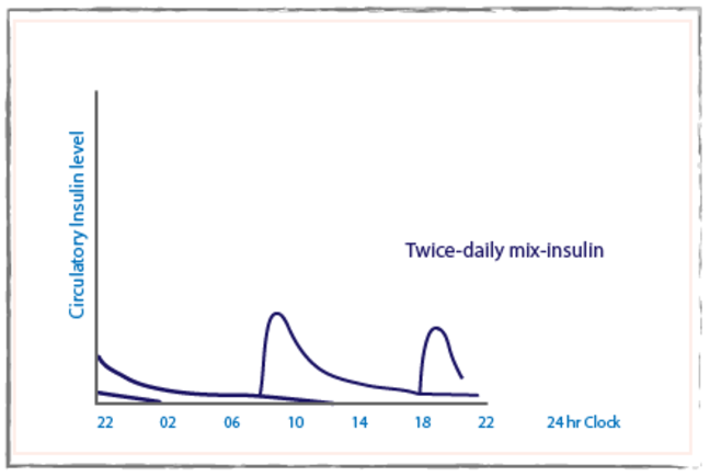 Twice daily mix insulin graph with circulatory insulin level on the Y-axis and a 24 hour period on the x-axis.  There are two peaks in the circulatory insulin level.