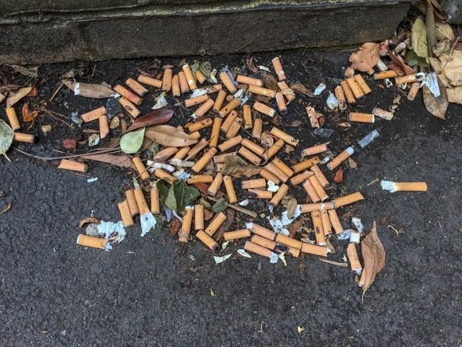 Multiple cigarette butts discarded on the ground.
