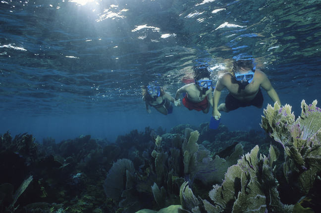 An underwater view of three people snorkelling across a reef.