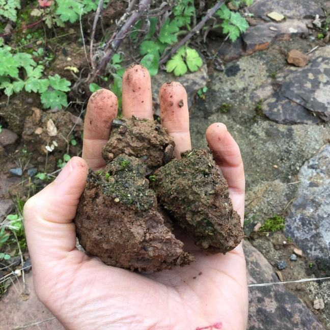 A photo of someone holding very dry soil in their hands