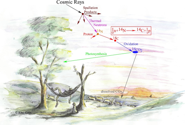 Cosmic rays interact with particles in the atmosphere, producing thermal energy and isotopes of nitrogen and carbon. These isotopes then enter their respective cycles and become invloved with the photosynthsis of plants and oxidation.