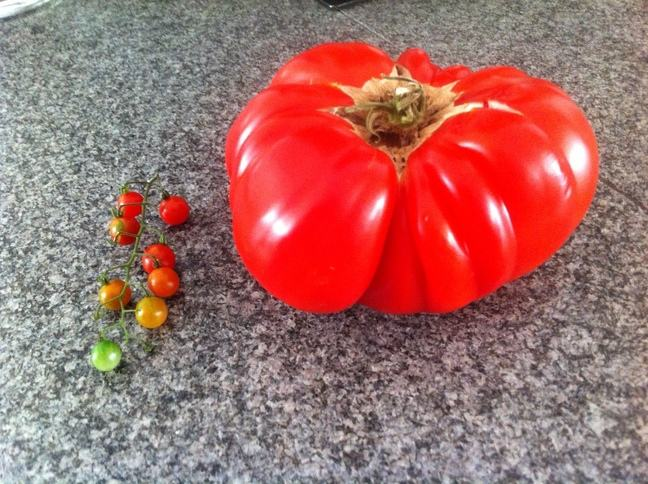 A photo of a small bunch of cherry tomatoes next to one very large red tomato.