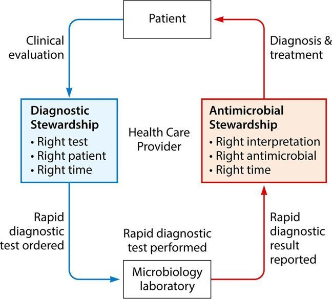 Cycle Schematic showing how diagnostic stewardship is part of an AMS intervention. Starting with the patient- they receive a clinical evaluation which leads to- Diagnostic stewardship involving right test, right patient, right time- leads to rapid diagnostic tests- rapid diagnostic test performed in the microbiology laboratory- results reported leads to- AMS right interpretation, right antimicrobial, right time leads to - diagnosis and treatment- for the patient