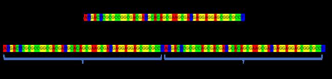 VNTR locus example