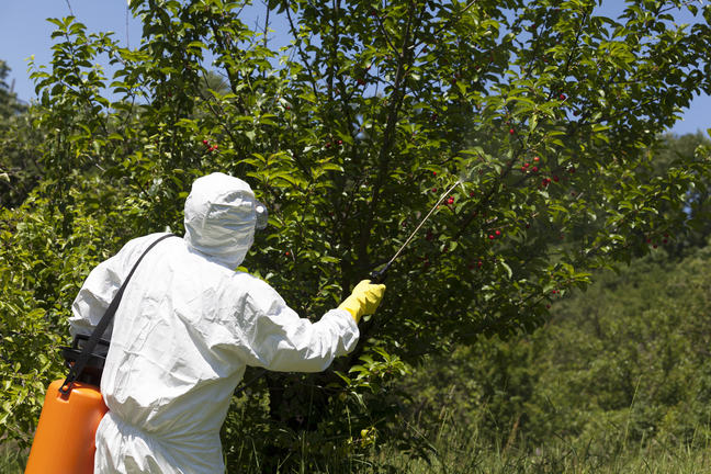 Spraying pesticides on fruit trees, using proper protective equipment