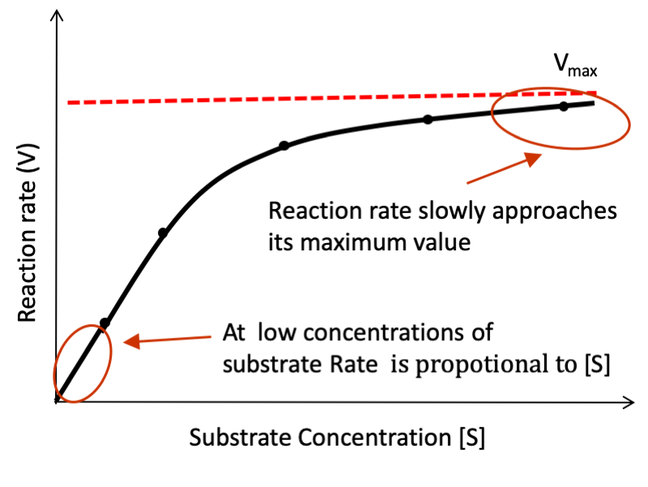 This graph shows the reaction rate as a function of substrate concentration: In the presence of an enzyme, initially the reaction rate is proportional to concentration of substrate **[S]**, but slowly plateaus as the concentration of substrate increase and the rate of reaction approaches the **maximum rate** (**Vmax**) as enzyme becomes saturated.