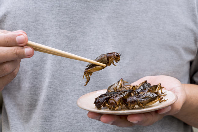 Person holding a plate of crickets in one hand and one cricket with chopsticks in the other hand