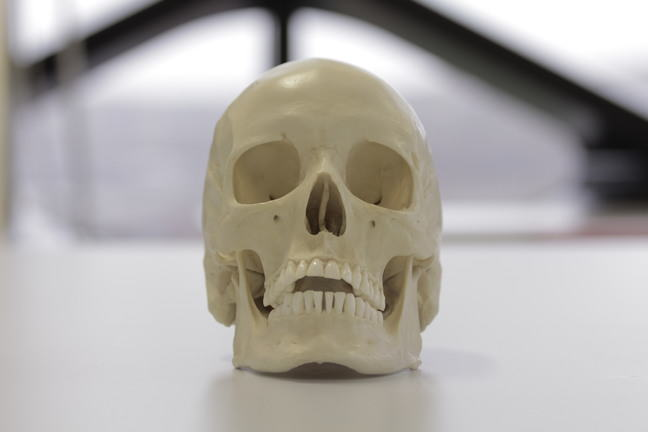 A European skull showing circular eye sockets with squared margins and a high nasal aperture
