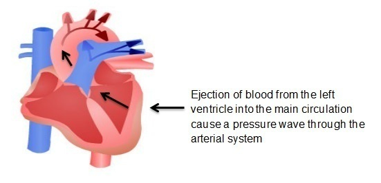 Diagram depicting ejection of blood from the left ventricle into the main circulation cause a pressure wave through the arterial system