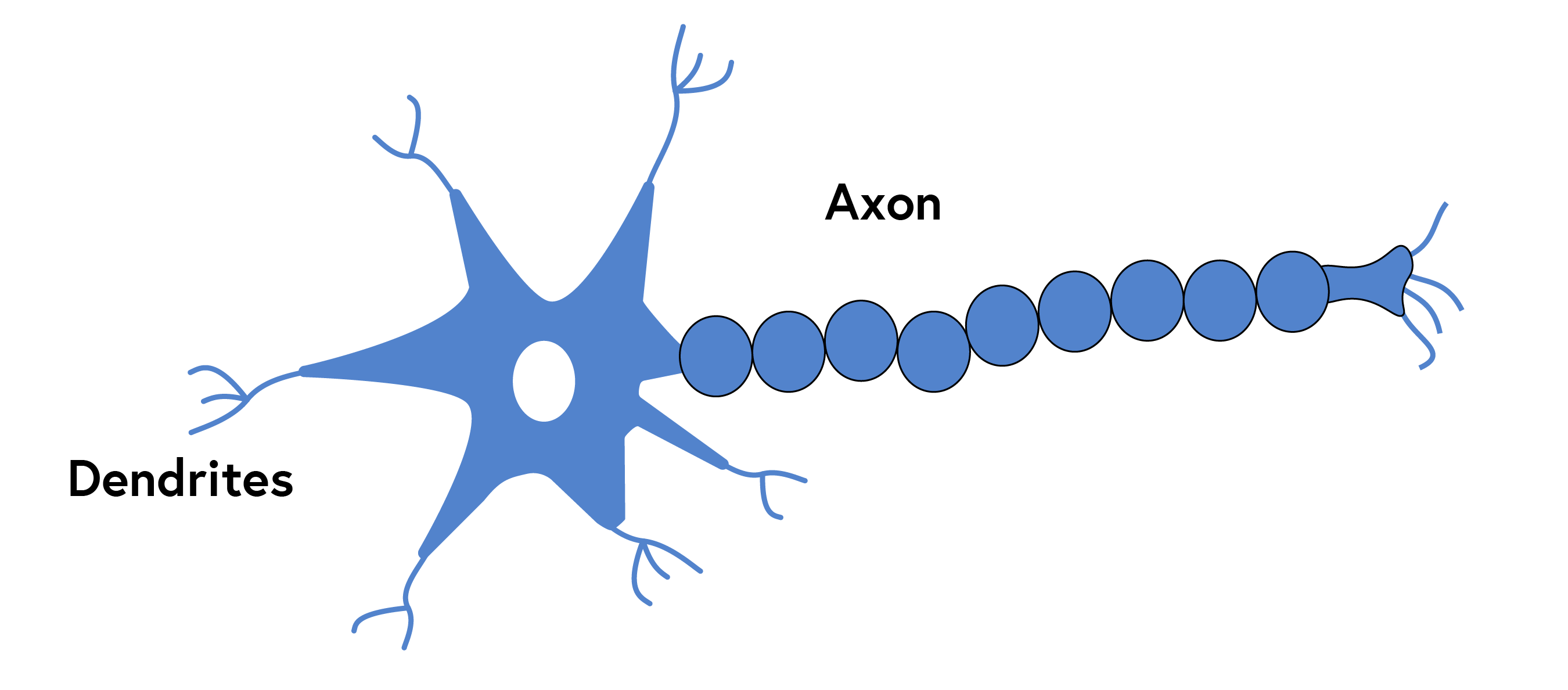 """""""An illustration of a neuron, such as those found in the human brain, composed of a star-like head, and a body composed of cells depicted as a bead-like chain, terminating in roots."""""""