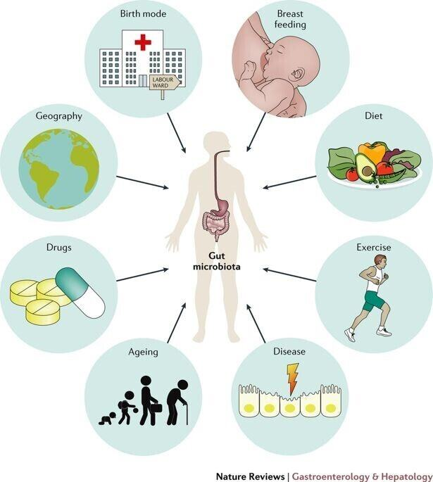 Figure 2. Major factors affecting the composition of the gut microbiome
