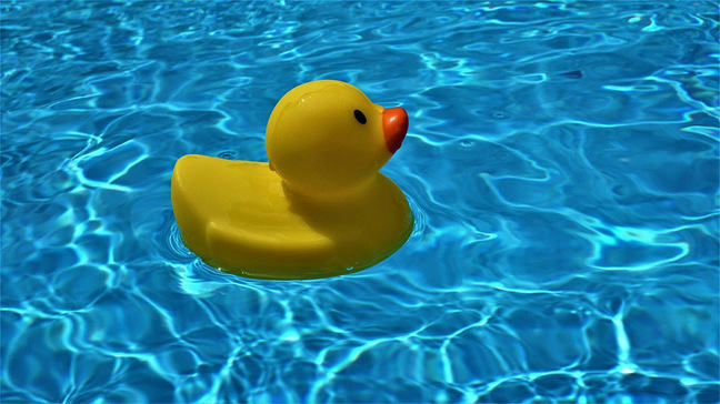 Rubber duck floating in a swimming pool