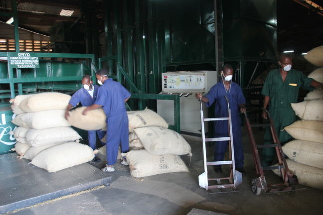 People in a coffee factory help each other in lifting heavy coffee sacks