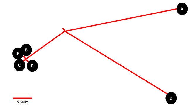 Phylogenetic relationships of isolates