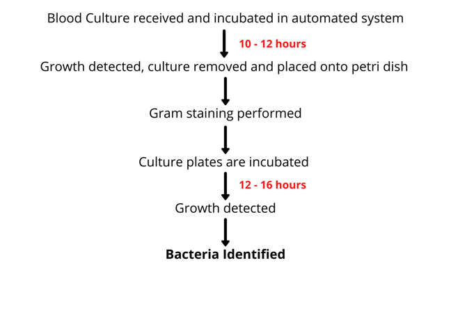 Flow diagram of blood culture testing process- first Blood culture recieved and incubated in automated system for 10-12hrs- Growth detected, culture removed and placed onto petri dish- gram staining performed- culture plates are incubated 12-16hrs - growth detected- Bacteria identified