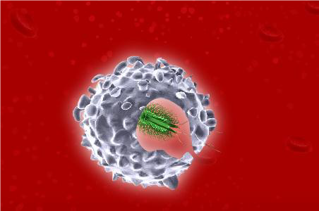 Close up (3D computer) image of a white blood cell