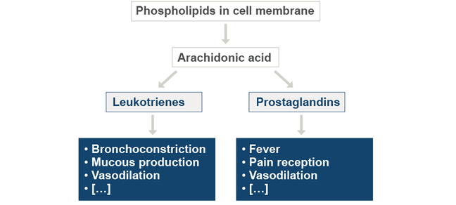 The diagram shows how prostaglandins and leukotrienes are metabolized from phospholipids in the cell membranes and what symptoms these cellular messengers may cause. The symptoms caused by leukotrienes are bronchoconstriction, mucous production, or vasodilation. Those caused by prostaglandis are fever, pain reception, or as well vasolidation.