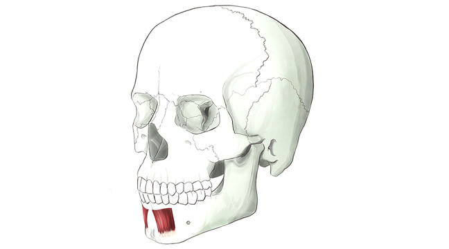 The muscles of the face - Forensic Facial Reconstruction