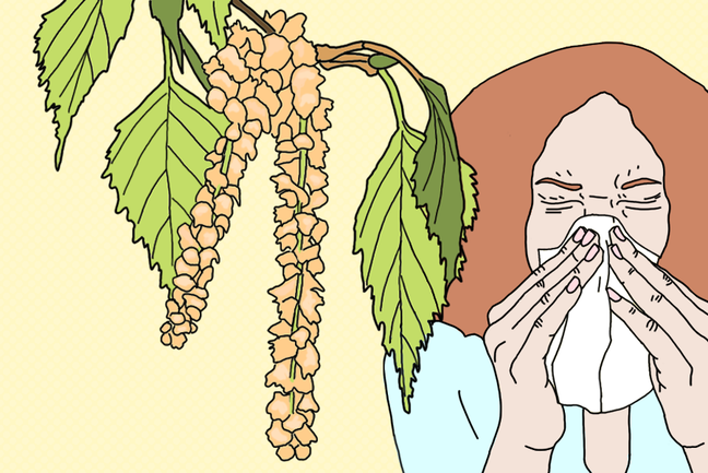 The illustration shows a blooming birch tree and a woman that is sneezing.