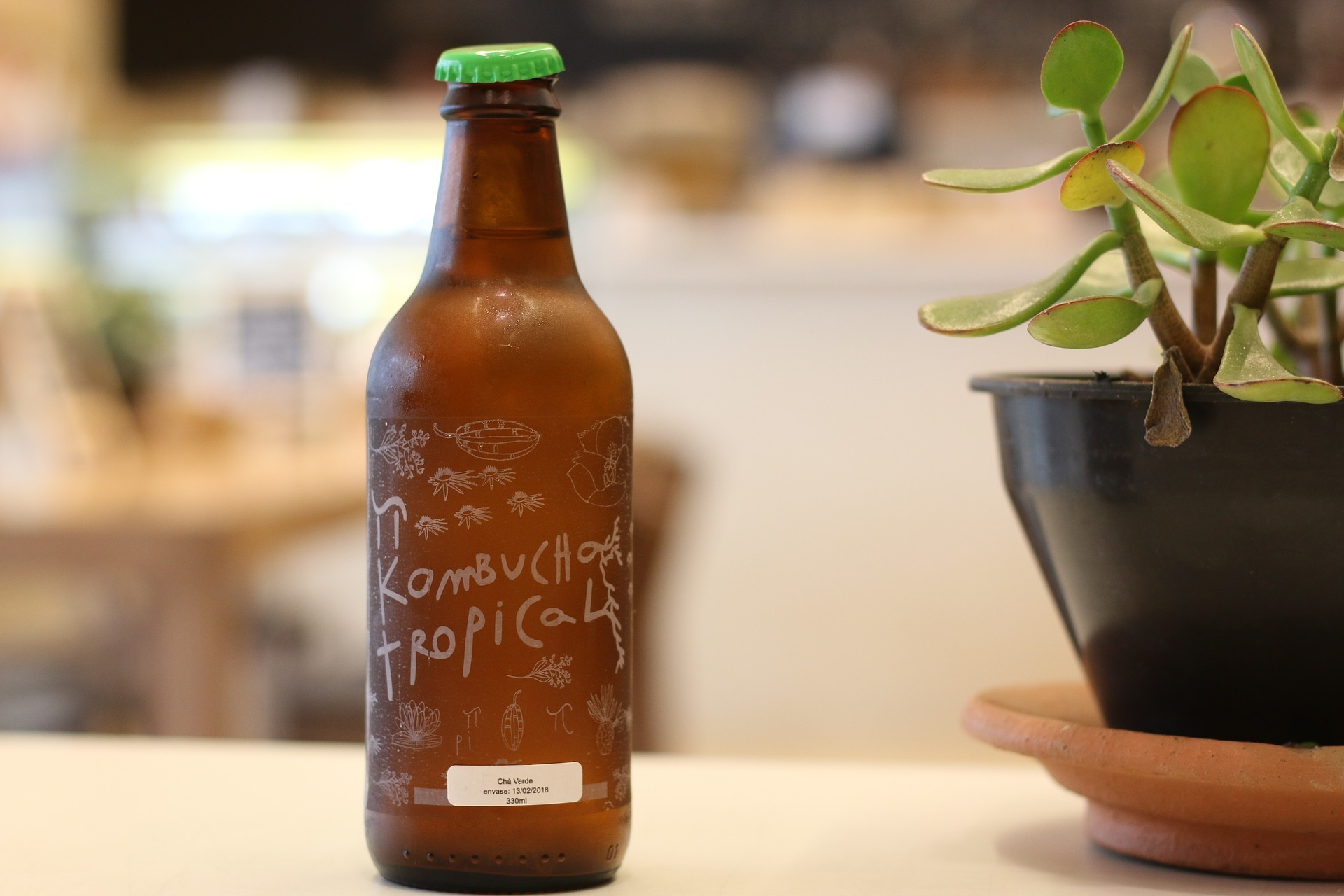 brown glass bottle of Kombucha standing on a table next to a potted plant