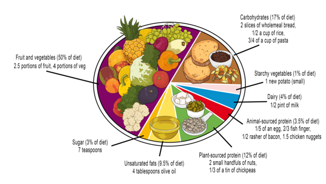 An infographic showing a healthy plate broken down into the food types as recommended by the planetary health diet. 50% is fruit and vegetables, 17% carbohydrate, 12% plant sourced protein, 9.5% unsaturated fats, 4% dairy, 3.5% animal sourced protein, 3% sugar, and 1% starchy vegetables