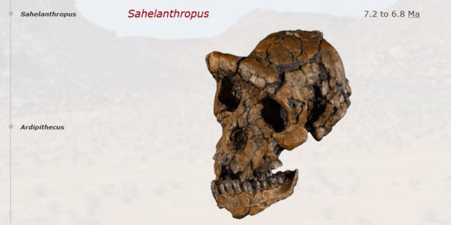Skulls Timeline