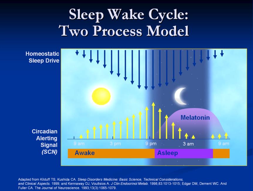 image depicting sleep wake process model