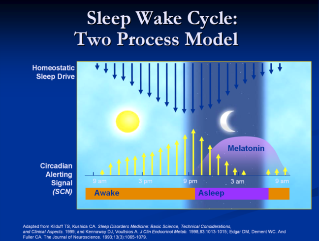 image depicting sleep wake process model