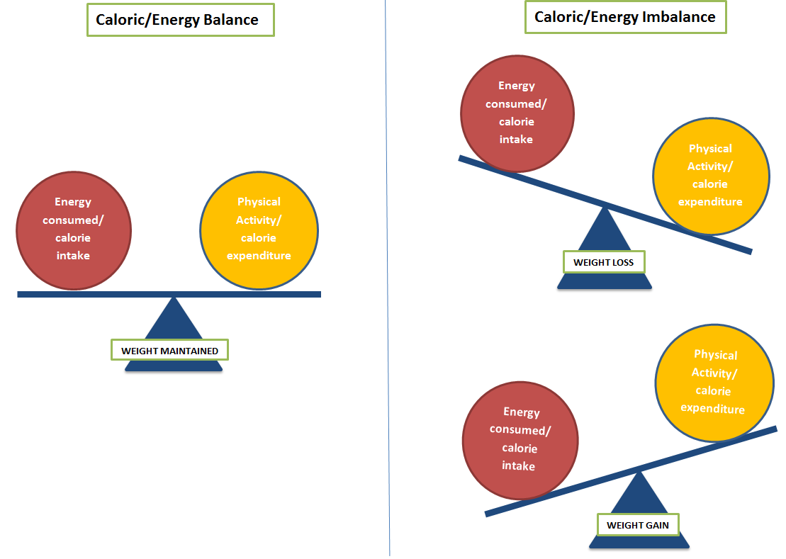 image showing how caloric balance is achieved when calorie intake and physical activity levels are equal, and calorie imbalance refers to when energy consumed is more (weight loss) or less (weight gain) than physical activity levels