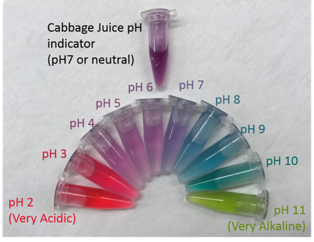 Colour scale for Cabbage juice