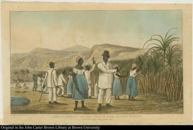 Jamaica Negroes Cutting Canes in their Working Dresses.